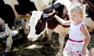 little-cow-girl