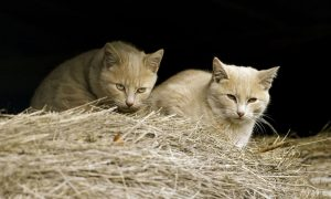 cats-feral