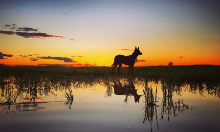 Cobar-Sunsets-&-Working-Dog