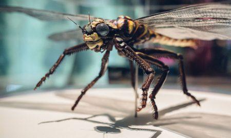 Dragonfly-exhibit-in-Bug-La