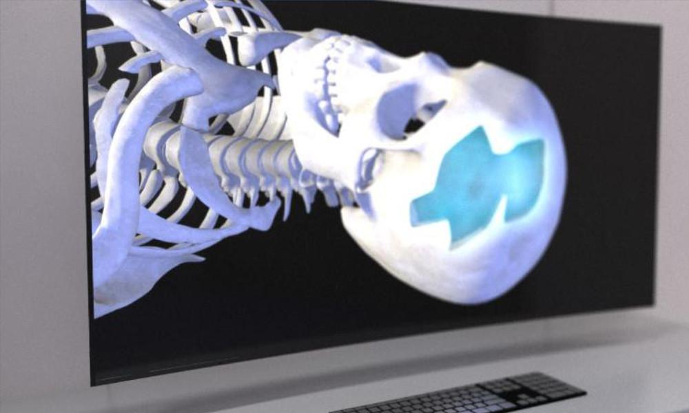 qut skull image