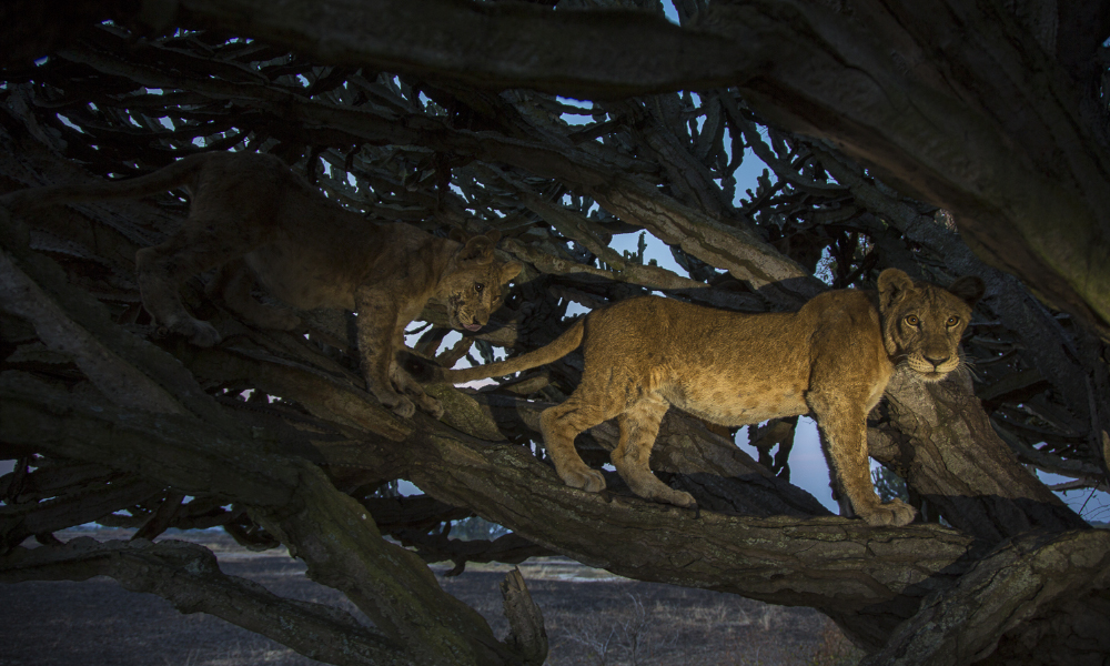 Science Tree-Lions 190131 – Pic 3