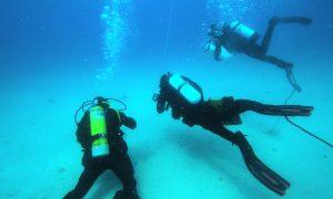Divers off Maria Island. Credit Craig Johnson