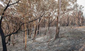 bushfire stock image
