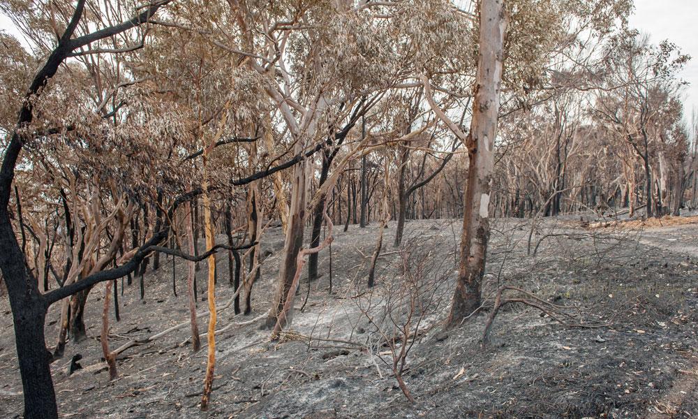 bushfire-2