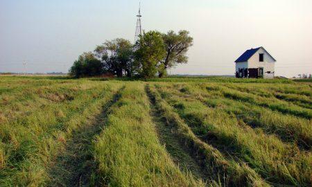 farm school stock image