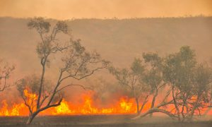 science behind wildfires